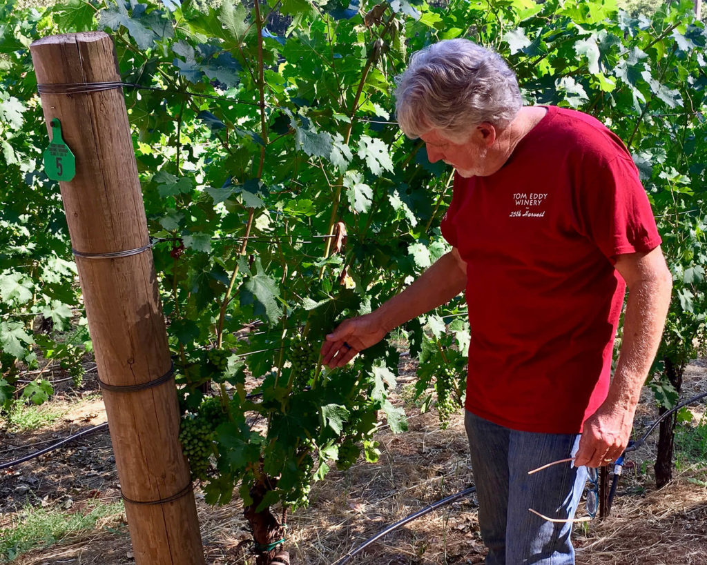 "Tom Eddy inspects the vines in Kerry's Vineyard, ""Little Pieces of Paradise."""