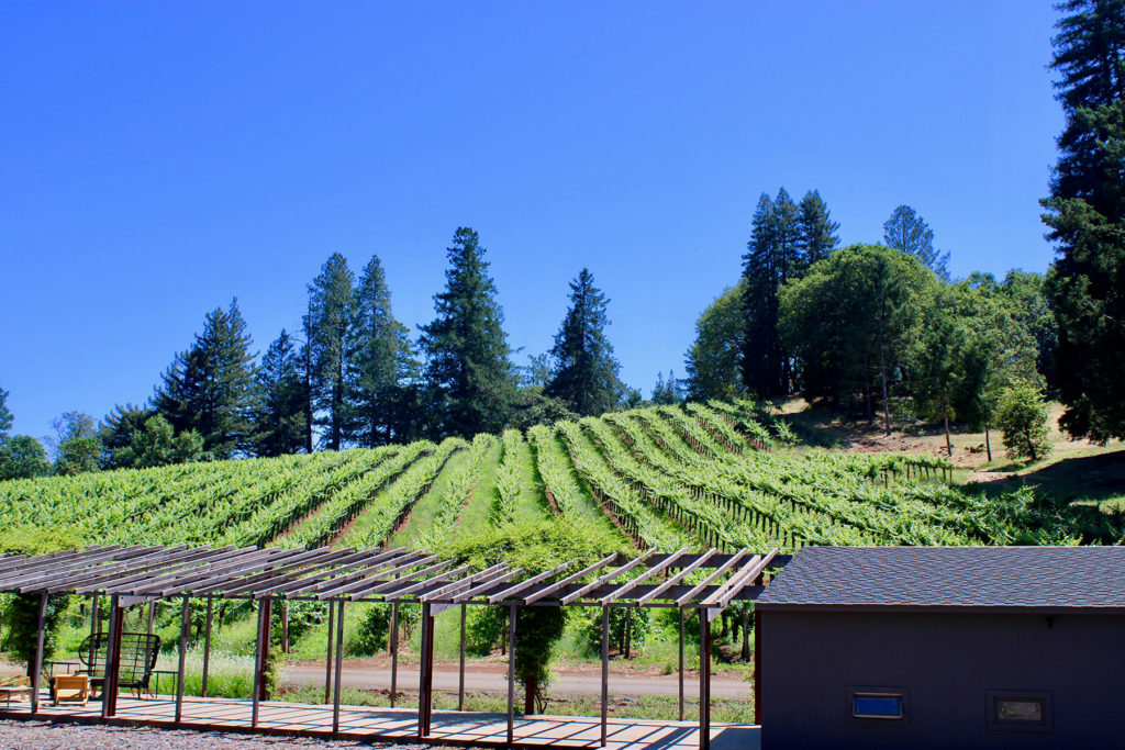 Cabernet Sauvignon at Theorem Vineyards.